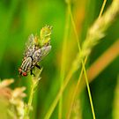 Swamp Fly by Arla M. Ruggles