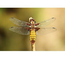 Glass Wings Photographic Print