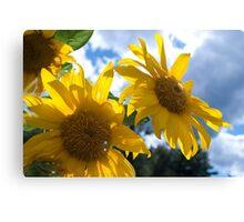 Sunny Day Sunflowers Origin Canvas Print