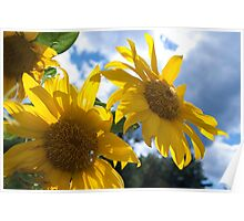 Sunny Day Sunflowers Origin Poster