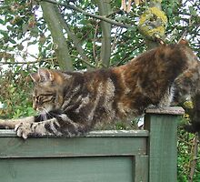 Stretchy Mia  by chelblack