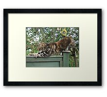 Stretchy Mia  Framed Print