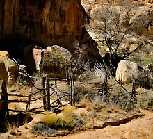 ACOMA SHADOWS by Thomas Barker-Detwiler