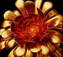 Golden Aeonium Glow by Yampimon