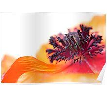 Eruption of colors... (I) Poster