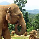 Elephant by JenniferLouise