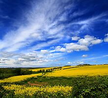 Rapeseed Field,Pembrokeshire Landscape by Mark Haynes Photography