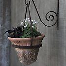 hanging flowers by alaskaman53