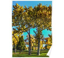 Twin Yellow & Orange Trees Poster