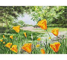 California Poppies Photographic Print