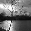 The Lake - Possum Creek Metro Park by Tony Wilder