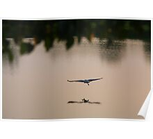 Self Reflection - Great Blue Heron Poster