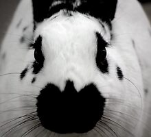Black And White Bunny by Agro Films