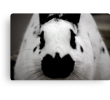 Black And White Bunny Canvas Print