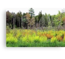 Swamp Colors 2 Canvas Print