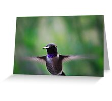 Hummingbird Photo Bomb Greeting Card