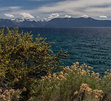 The Wild - Lake Tahoe by Richard Thelen