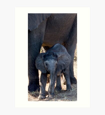 The Little One - Chobe NP Botswana Art Print