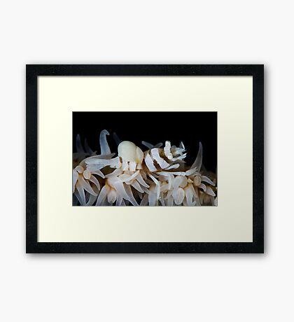 Zanzibar Shrimp & Isopod Framed Print