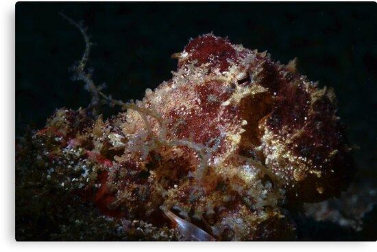 Blue Ringed Octopus by MattTworkowski