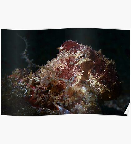 Blue Ringed Octopus Poster