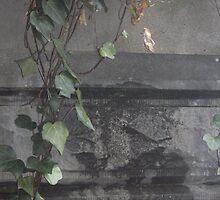 Ivy strand by AmandaWitt