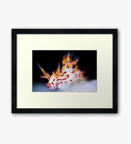 Shaggy Aegires Framed Print