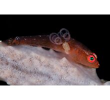 Goby With Parasite Photographic Print