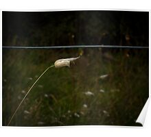 Seed head Poster