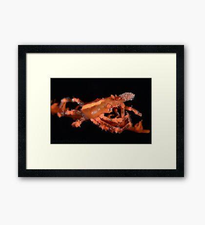 Orange Xeno Crab Framed Print