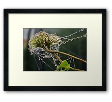 Jewels in the gloom Framed Print