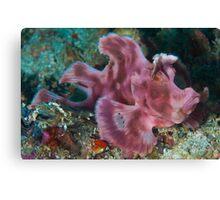 Paddleflap Scorpionfish Canvas Print