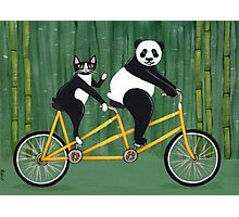 Panda and Cat Bicycle Tandem Photographic Print