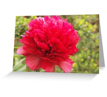 phony rose Greeting Card