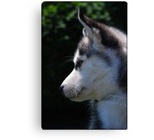 Profile Of A Husky Pup Canvas Print