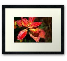 Autumn Blueberry Framed Print
