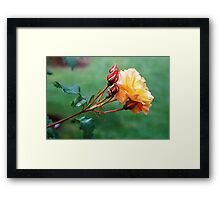 Solo in Yellow Framed Print