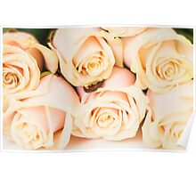 Beautiful bouquet with tender cream roses texture Poster