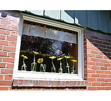 University Place Garden Tour - Home #1 Dancing Gerbera Daisies on a Sill Photographic Print