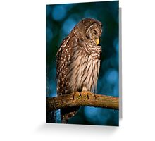 Drowsy Barred Owl at Sunrise Greeting Card