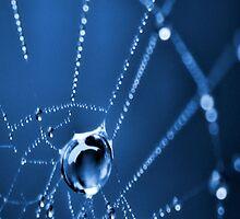 Dew Drops by designed2dazzle