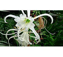 Delicate White Photographic Print
