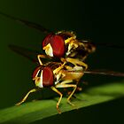 Flower Flies mating by Kane Slater