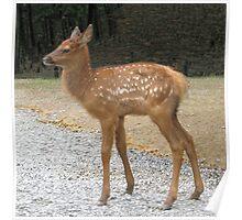 Precious Little Elk Fawn Poster