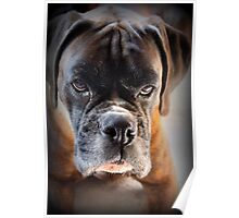Go Ahead .... Make My Day  ~ Boxer Dog Series ~ Poster