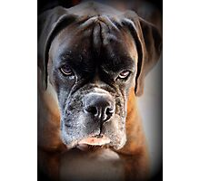 Go Ahead .... Make My Day  ~ Boxer Dog Series ~ Photographic Print