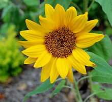 One Yellow Flower by Cynthia48