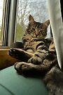 Lazy kitty cat by Jemma Richards
