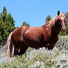 Majestic Stallion,Virginia City Highlands,Virginia City Nevada USA by Anthony & Nancy  Leake