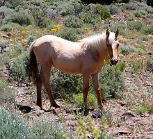 White Beauty,Virginia City Highlands,Virginia City Nevada USA by Anthony & Nancy  Leake